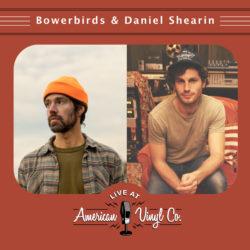 bowerbirds daniel shearin
